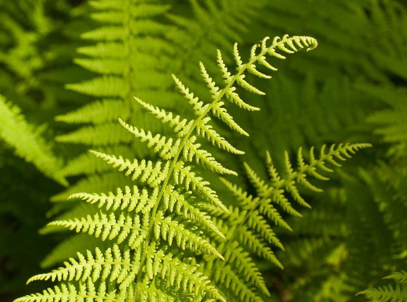 ferns 10.jpg