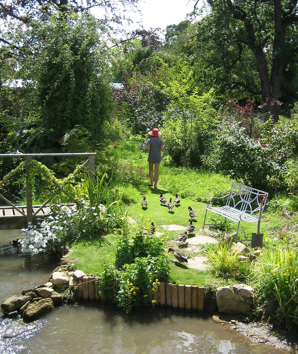 Pink-Harrison-Artist-Ducks-Broadway-Cotswolds-UK.jpg