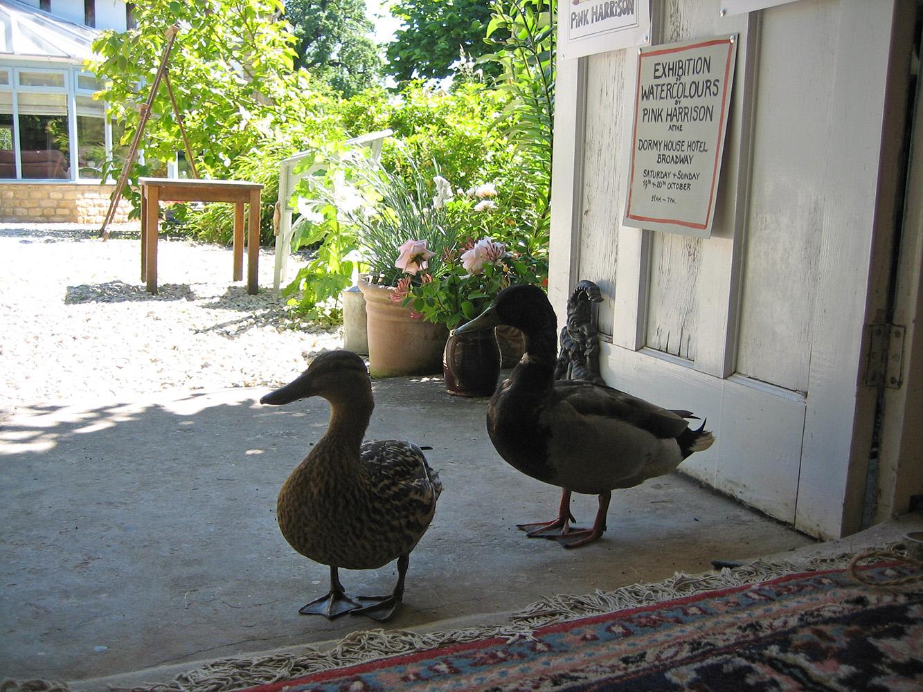 ducks-visiting-Pink-in-her-studio.jpg