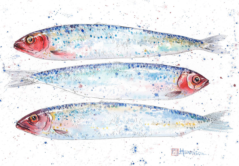 Sardines-Pink-Harrison-Artist-Broadway-Worcestershire-England.jpg