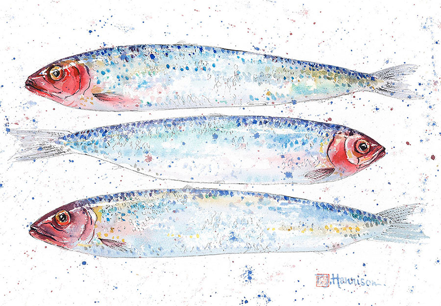 "SARDINES* watercolour 12"" x 16"""