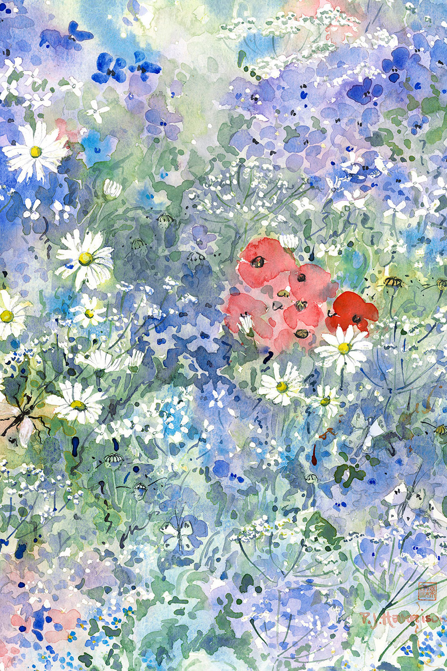 "DADDY LONGLEGS & RED POPPIES* watercolour 17"" x 13"""