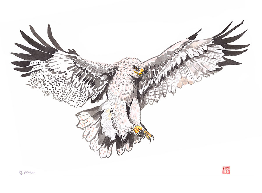 """EAGLE* chinese ink 23"""" x 30"""" sold"""