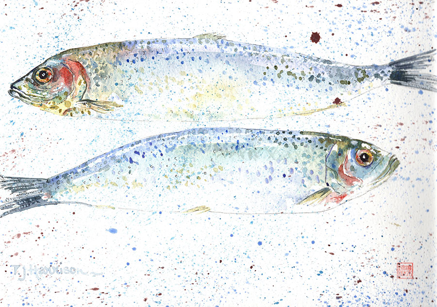 "HERRINGS watercolour 11"" x 15"""