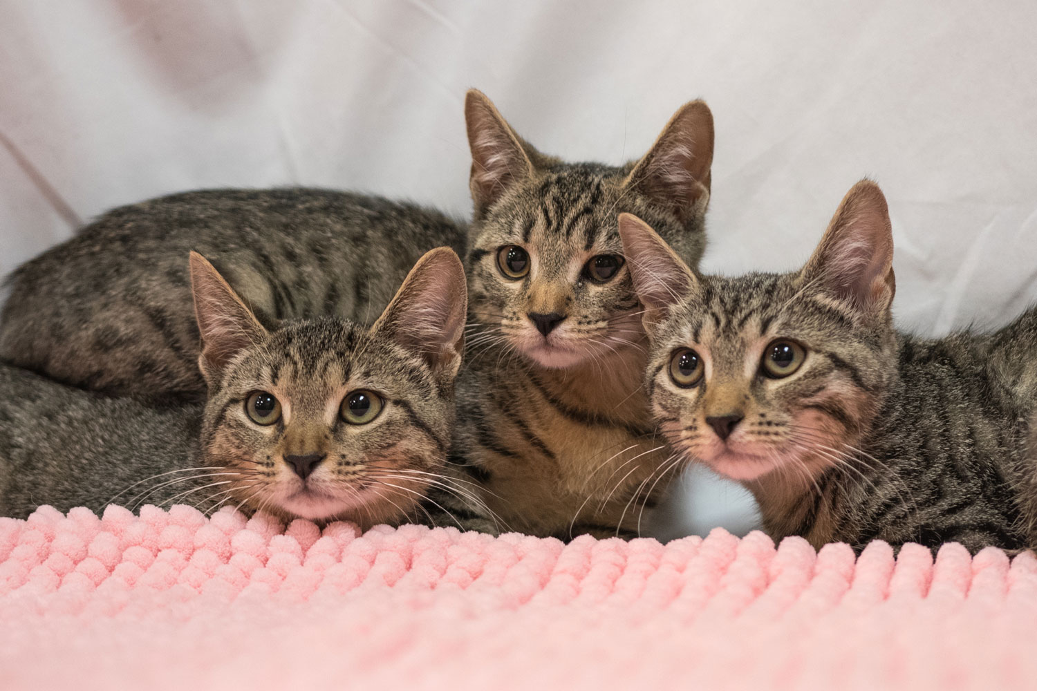 DID YOU KNOW? - One unaltered female cat and her offspring can produce 370,000 kittens in 7 years.