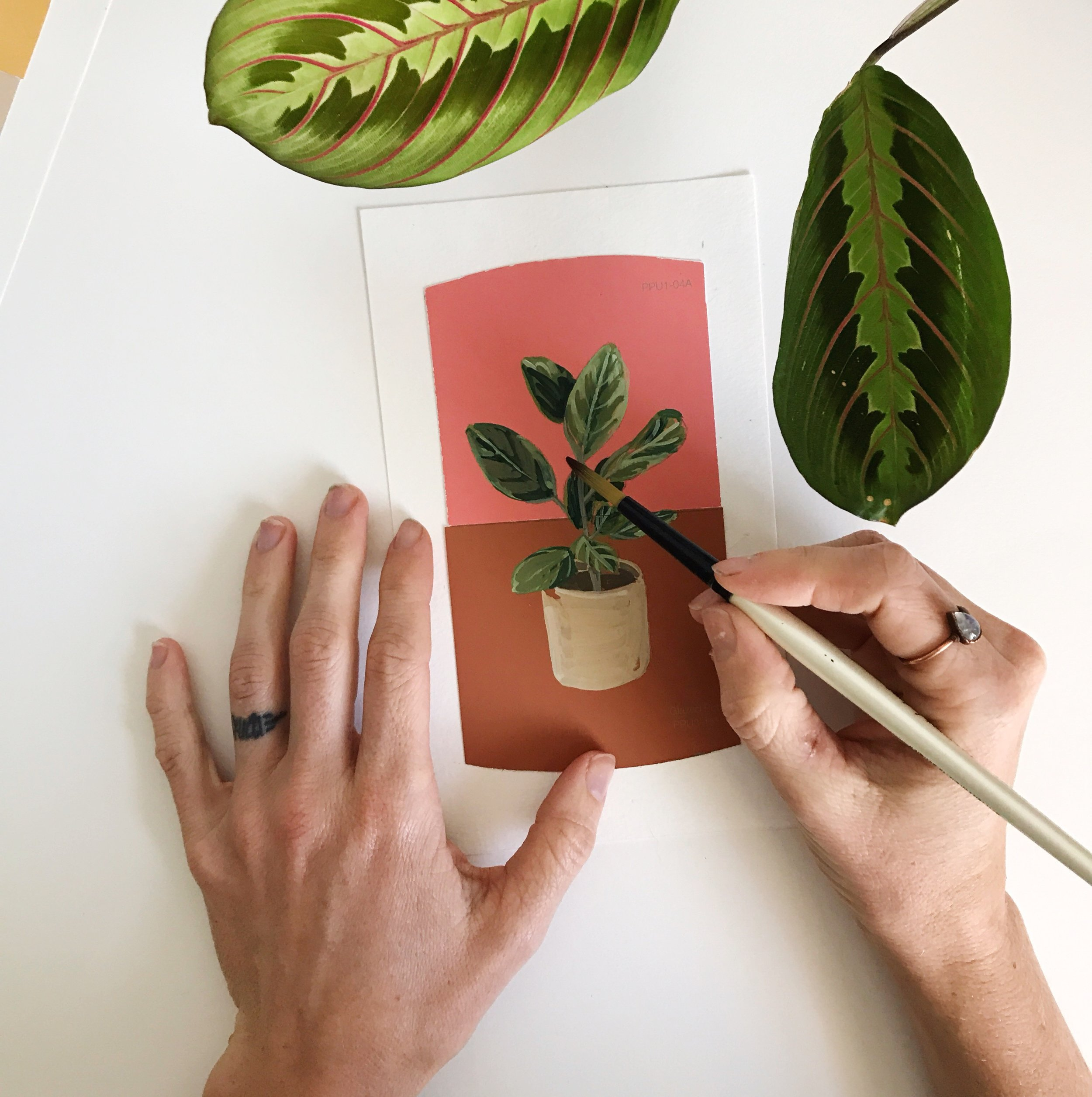 Plants On Paint Chips - Visit the botanical collection.