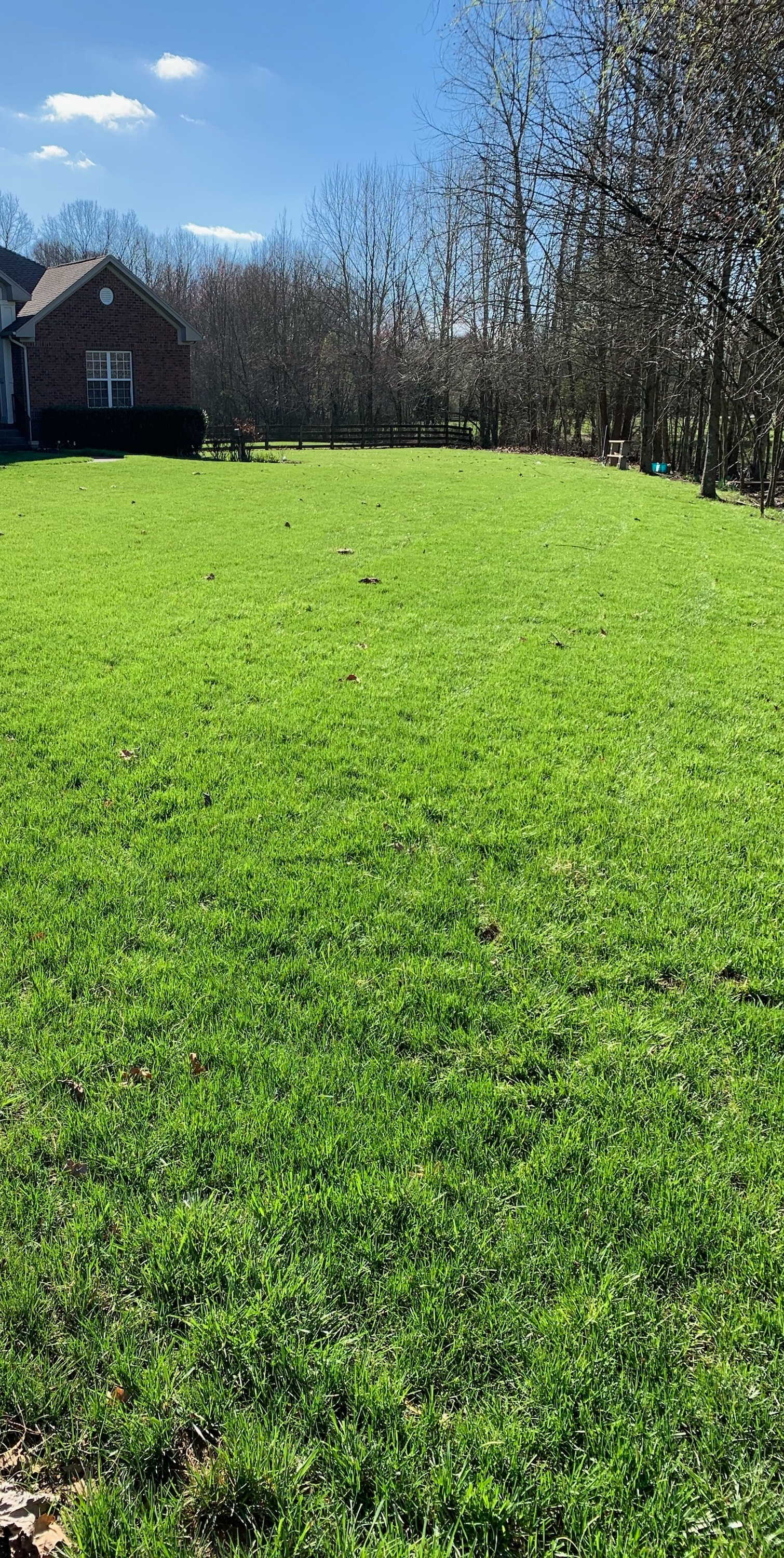 Treatment 5: - Weed Control (August-Mid September) Herbicides control grassy and broadleaf weeds in the lawn.