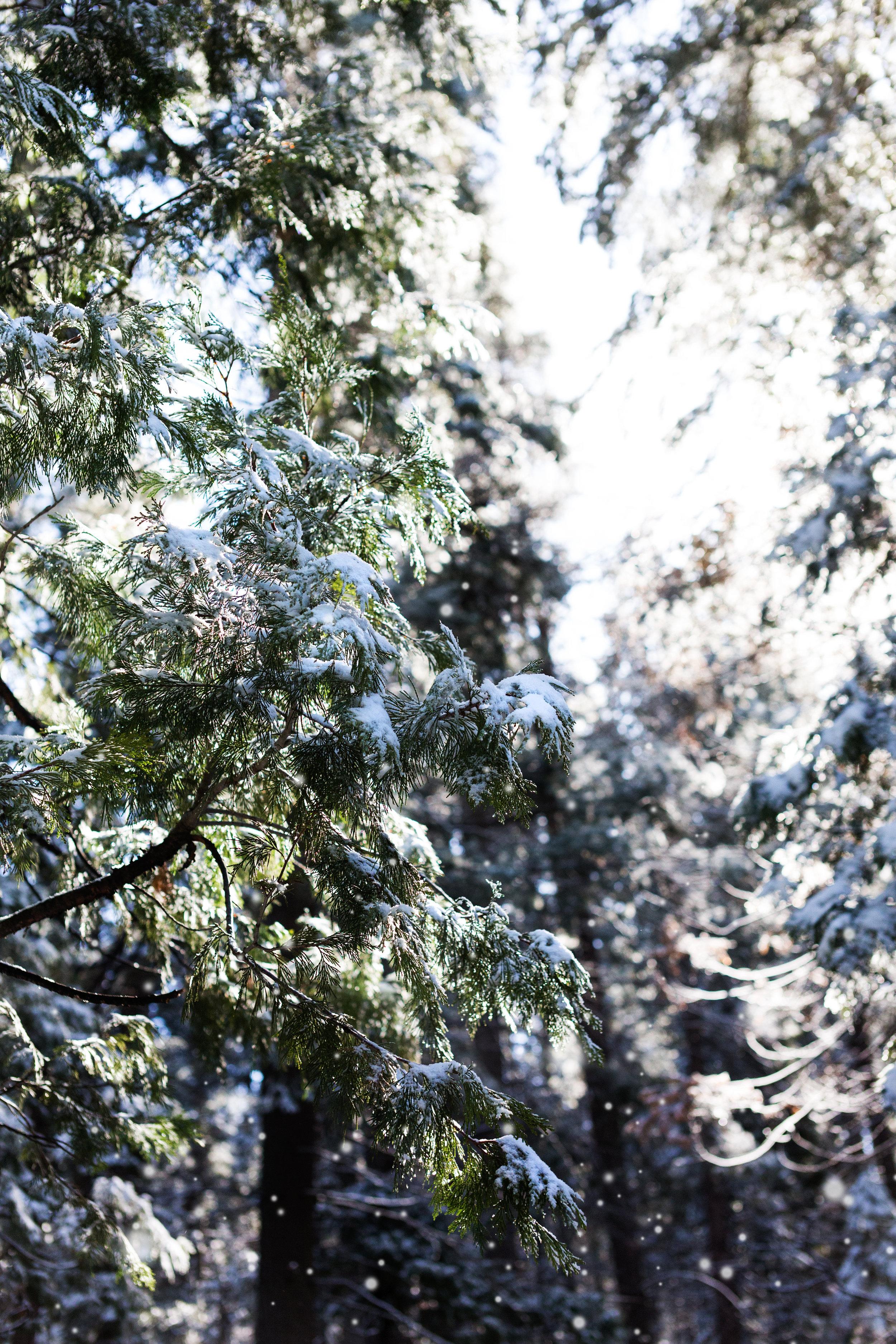 YOSEMITE_SNOW.jpg
