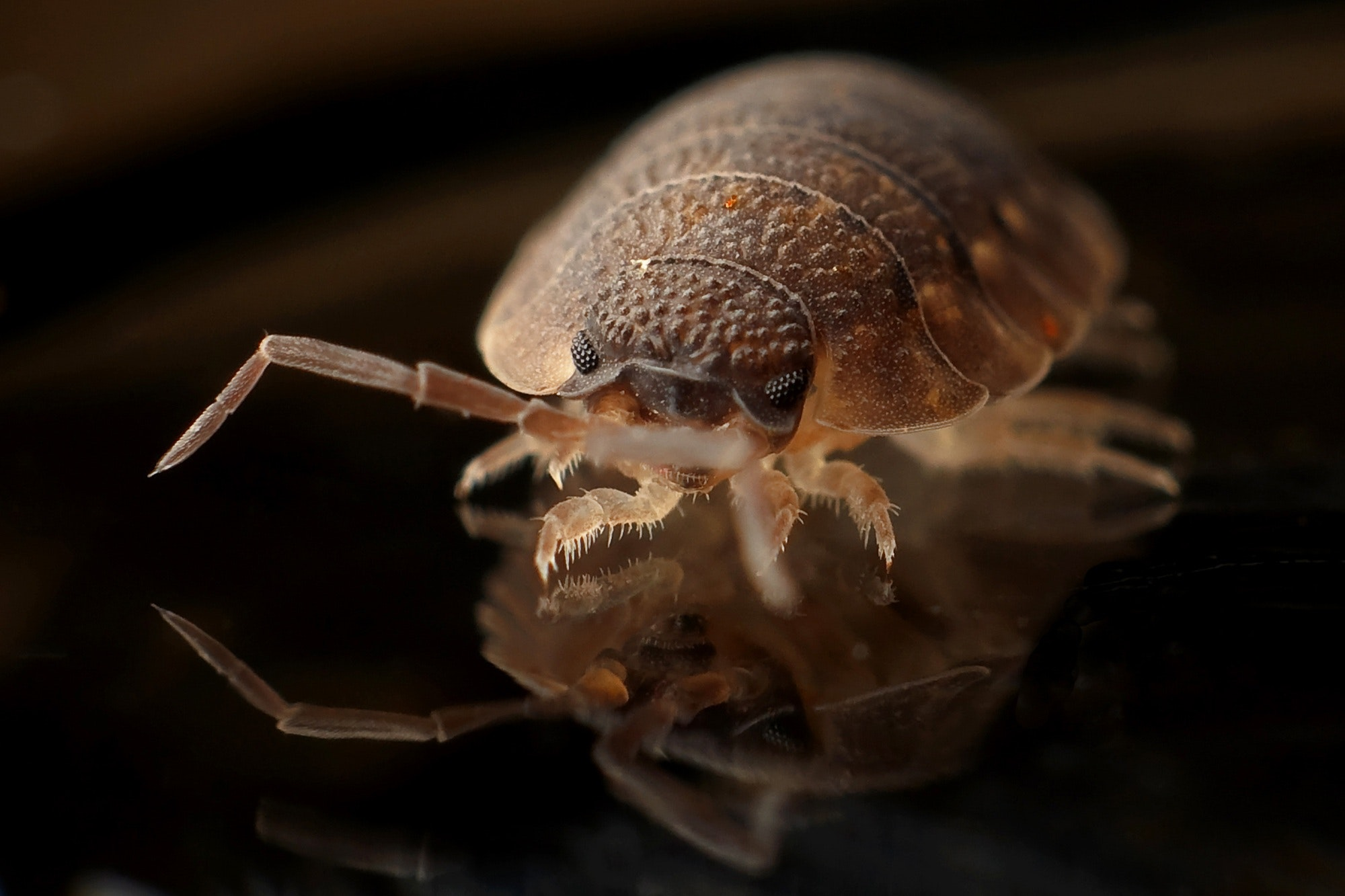 Bed Bugs? - We specialize in Bed Bug Extermination, backed by our 100% Guarantee.