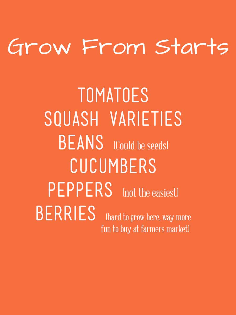 grow from starts.jpg