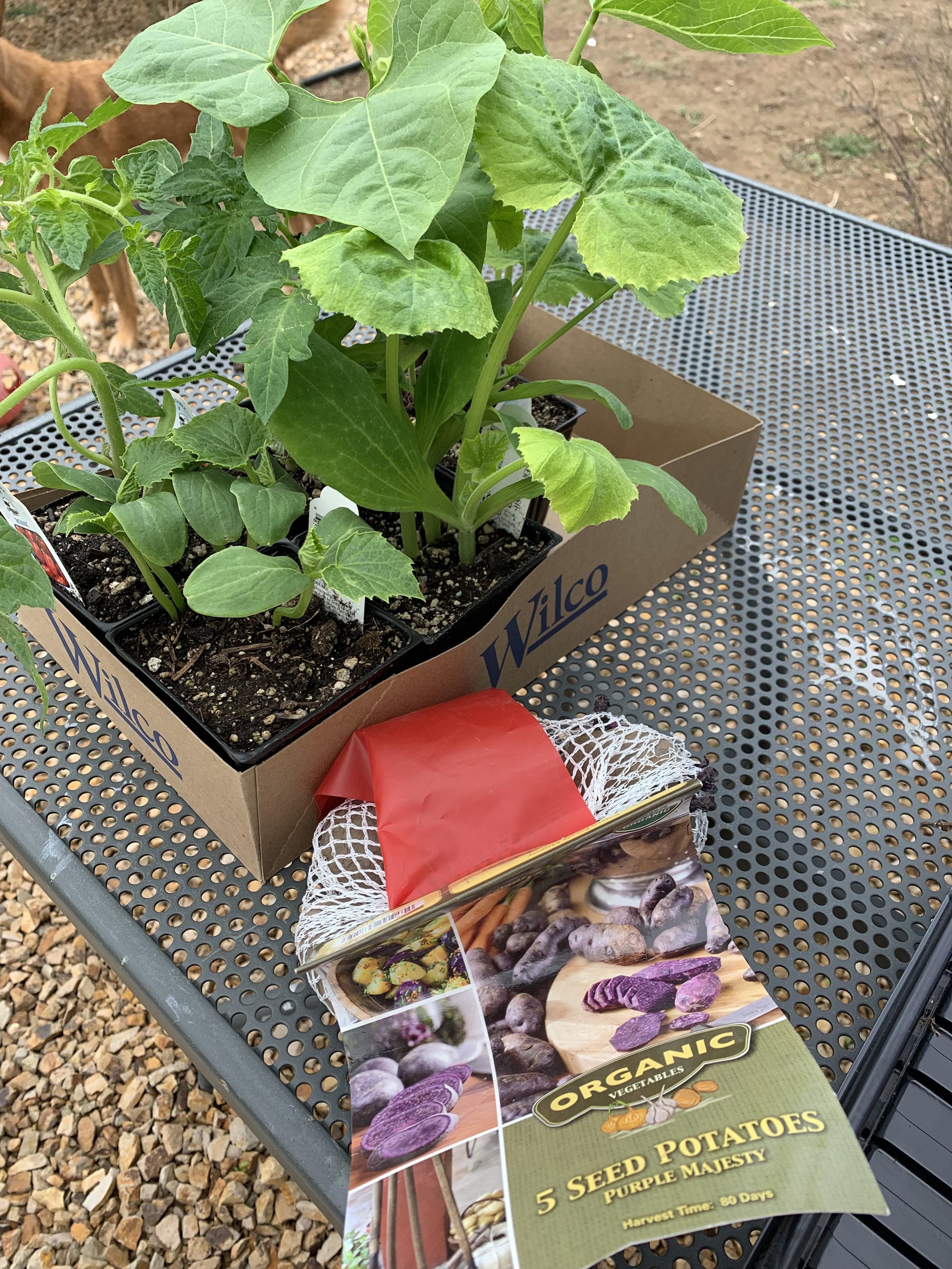 10 Tips For Growing Vegetables In Central Oregon With Kids Central Oregon Kids