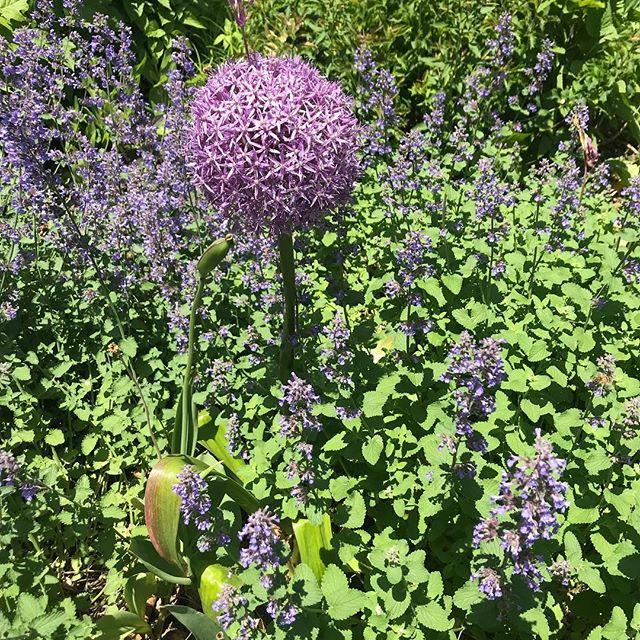 New York spring flowers. Sooo purple! 💜