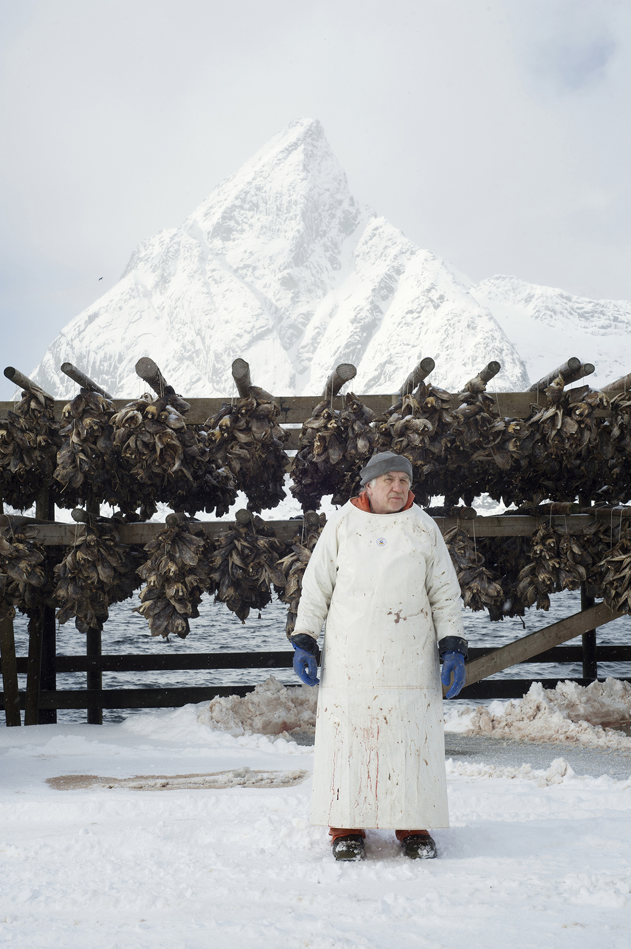 Ever since the age of the Vikings cod fishery has had a great impact on economy, employment and settlement along the coast of Norway.  Most of these photographs are from the book The Lofoten Fishery, published in 2017.