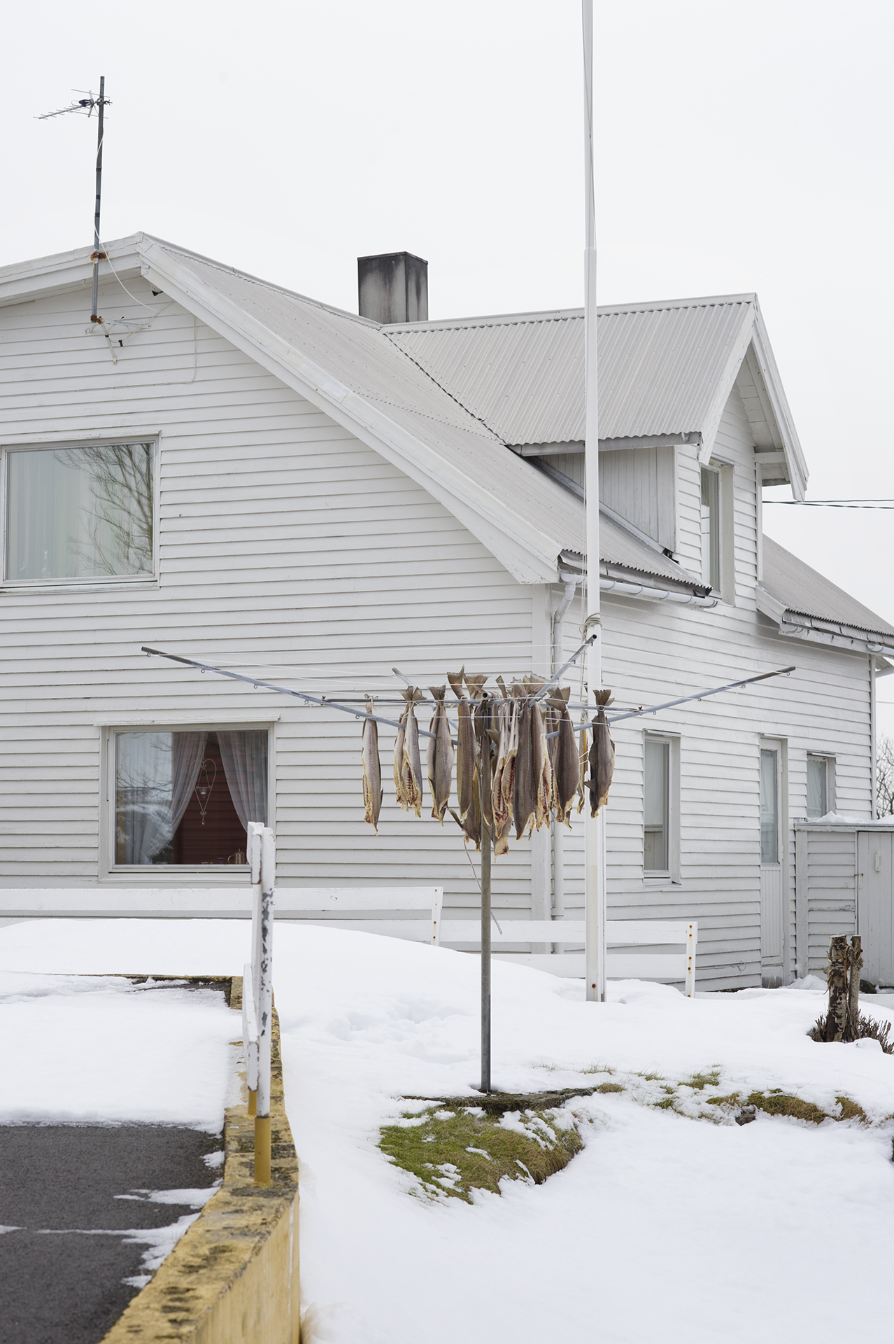 Stockfish. Henningsvær. From the book The Lofoten Fishery.