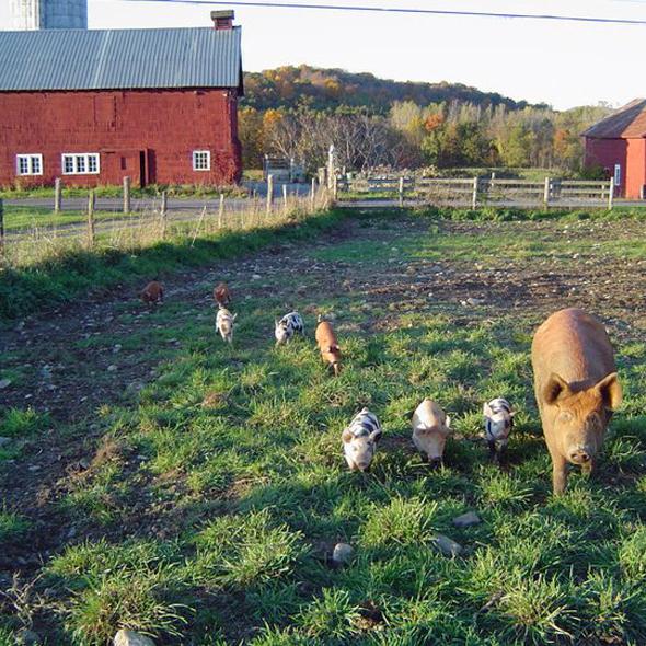 Pigasso Farms