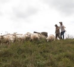Farm and Training