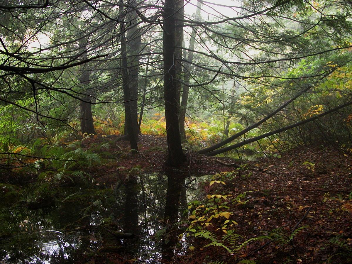 Ecological Habitats