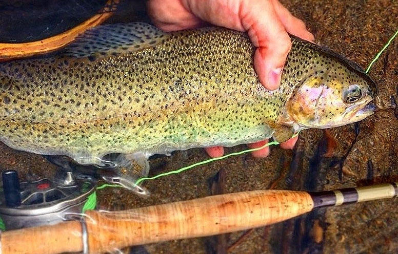 Flying_Fish_Outdoors_West_Branch_Ausable_Rainbow_Trout