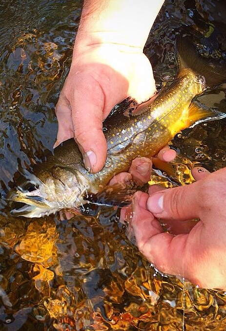 Flying_Fish_Outdoors_Adirondack Fly_Fishing_Guide_Brook_trout.jpg