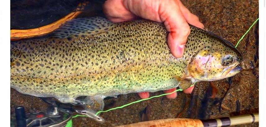 Flying_Fish_Outdoors_Adirondack Fly_Fishing_Guide_Trout_Fishing.jpg