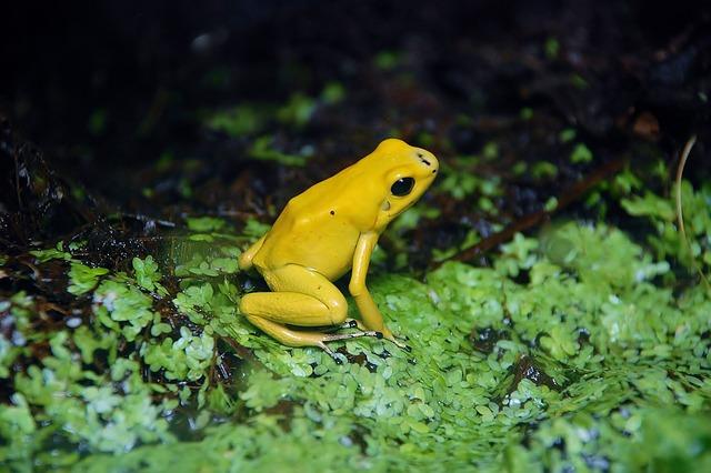 frog-170006_640.jpg