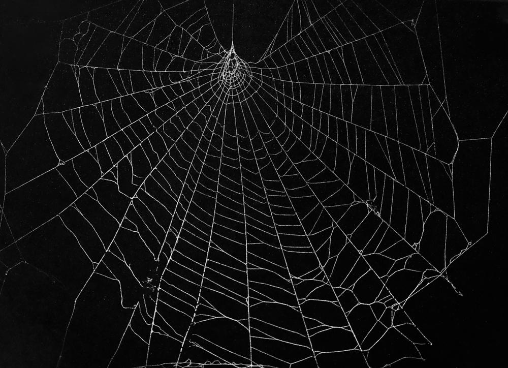 SpiderWeb_201907220013-Edit.jpg