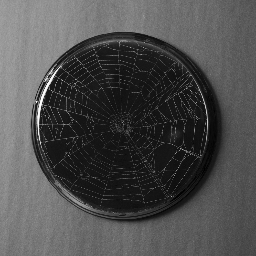 SpiderWeb_201907220005.jpg