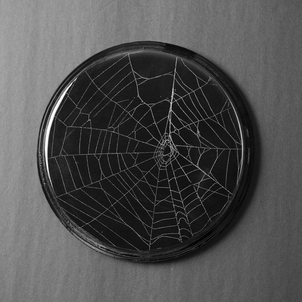 SpiderWeb_201907220007.jpg