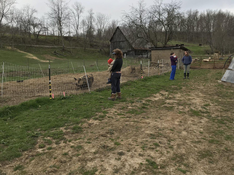 Meat Info — next 7 organic farm