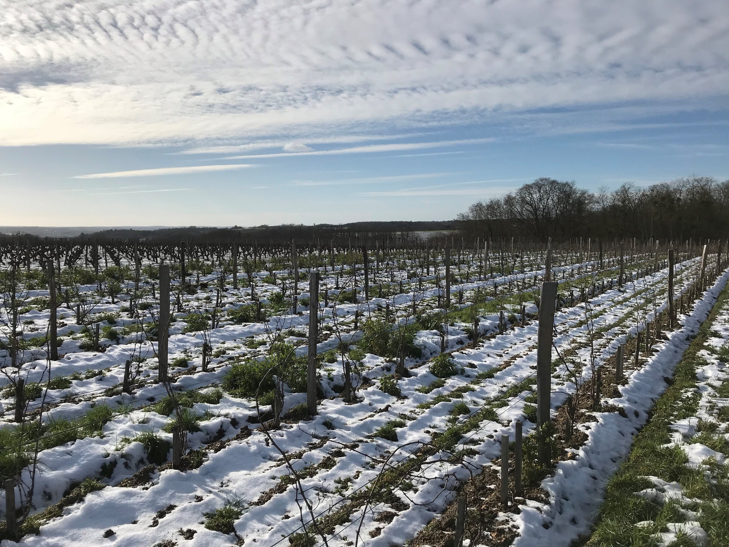 vineyards snow.jpg