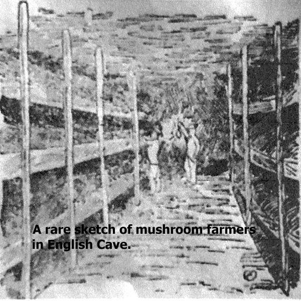Mushroom pic 2 with text.jpg
