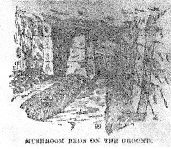 mushrooms pic 1 jpg.jpg