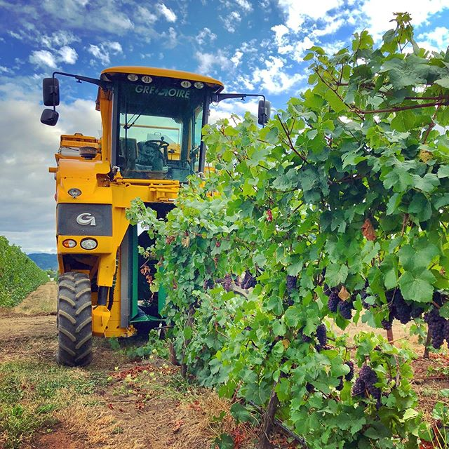 First day of harvest is in the books! We picked some pretty Pinot Gris for @erathwines, and are staged and ready for more tomorrow. 🍇 🚜 🚛🍷 #pinotgris #oregonwine #oregonpinotgris #farmlife #vintage2019 #2019vintage #vineyardviews #harvest