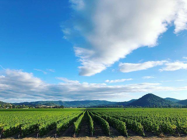 Calm before the storm tomorrow, calling for rain, but planning to pick before it gets started....wish us luck! 🤞🏻🍇🚜🚛🍷 #harvest #pinotgris #oregonpinotgris #oregonwine #farmlife #vineyard #vineyardviews #vineyardlife #harvest2019 #pinkiesdown