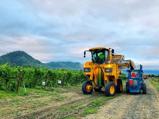 Fastest way to get fruit from vine to winery! We start picking fruit at 3:00am 😱 to get our fruit to the winery cool and stable so it's ready to let the winemakers work their magic 🍇✨🍷 #oregonpinot #oregonwine #machineharvest #gregoire #harvest #vintage2019 #pinotnoir #vineyardlife #vineyardviews