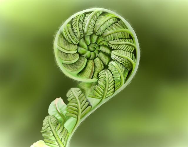 1.4.24 Image of an unfurling fern leaf.jpg