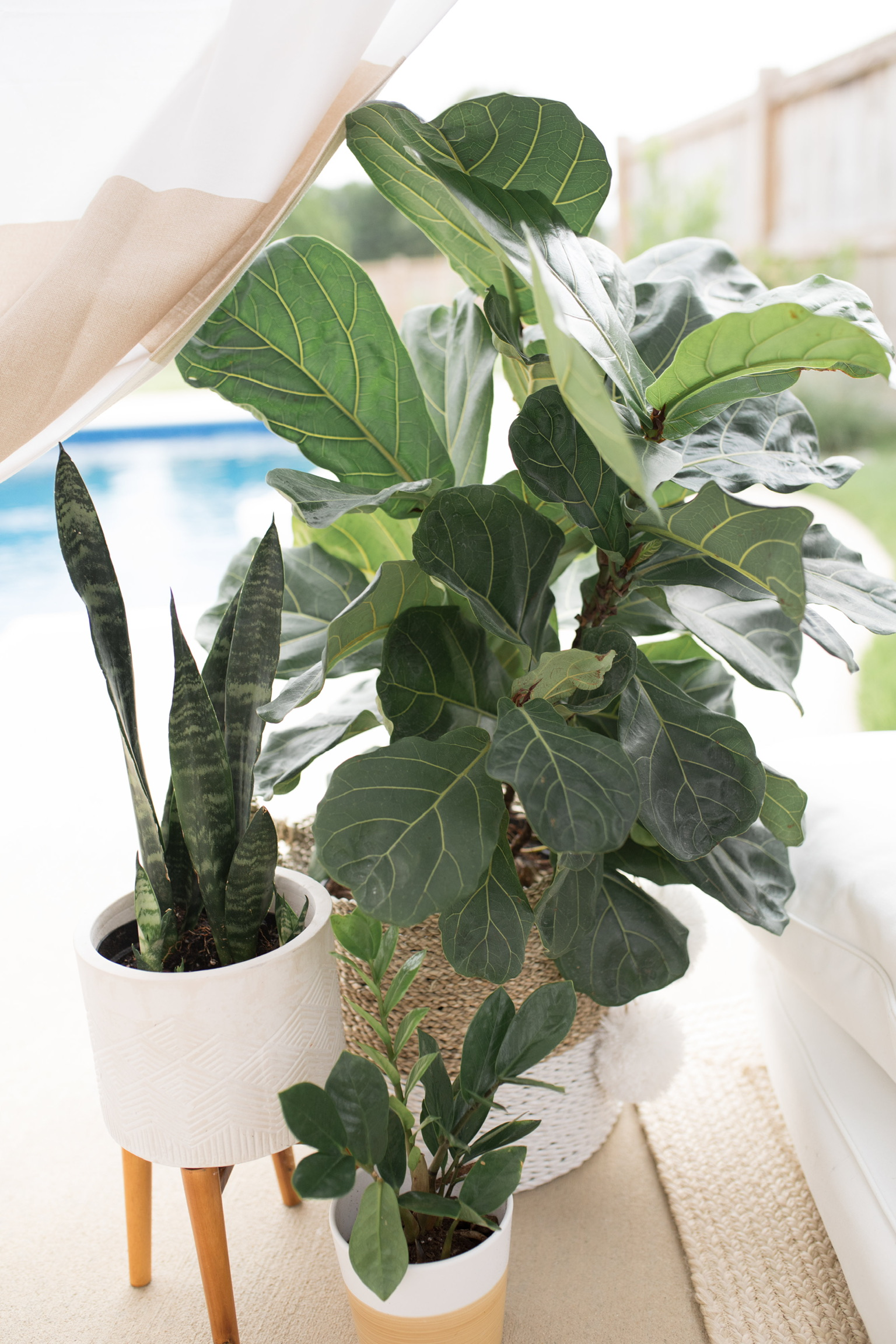 Plant containers make a home fashion statement.