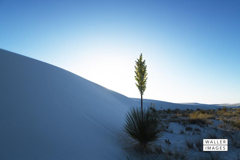 web - White Sands NM.jpg