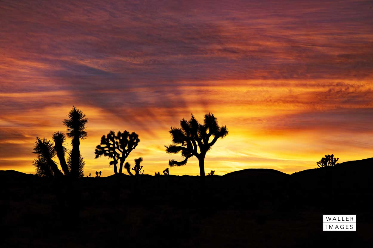 sunset_Joshua-Tree-NP_web.jpg