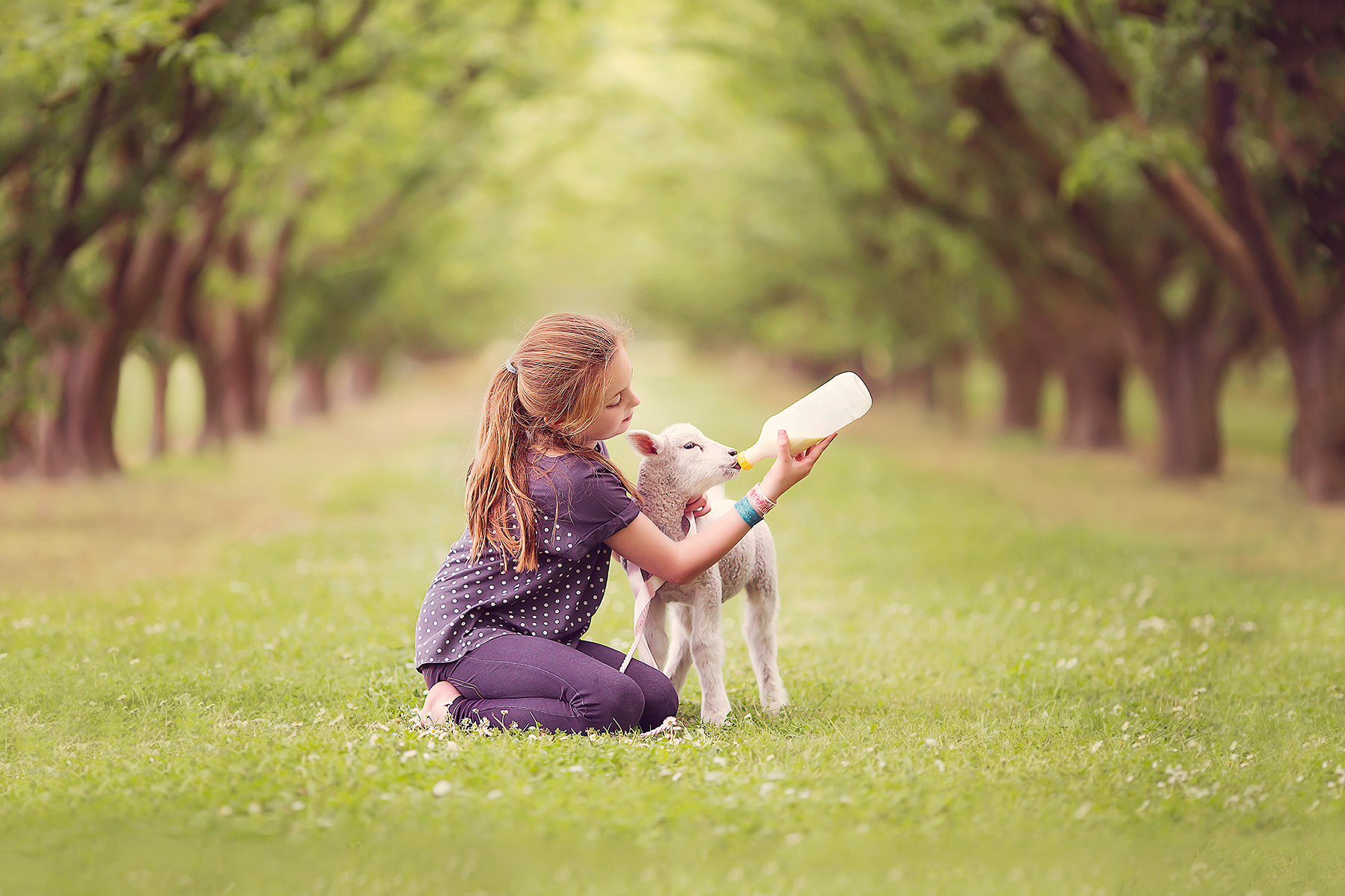 Brooke lamb.jpg
