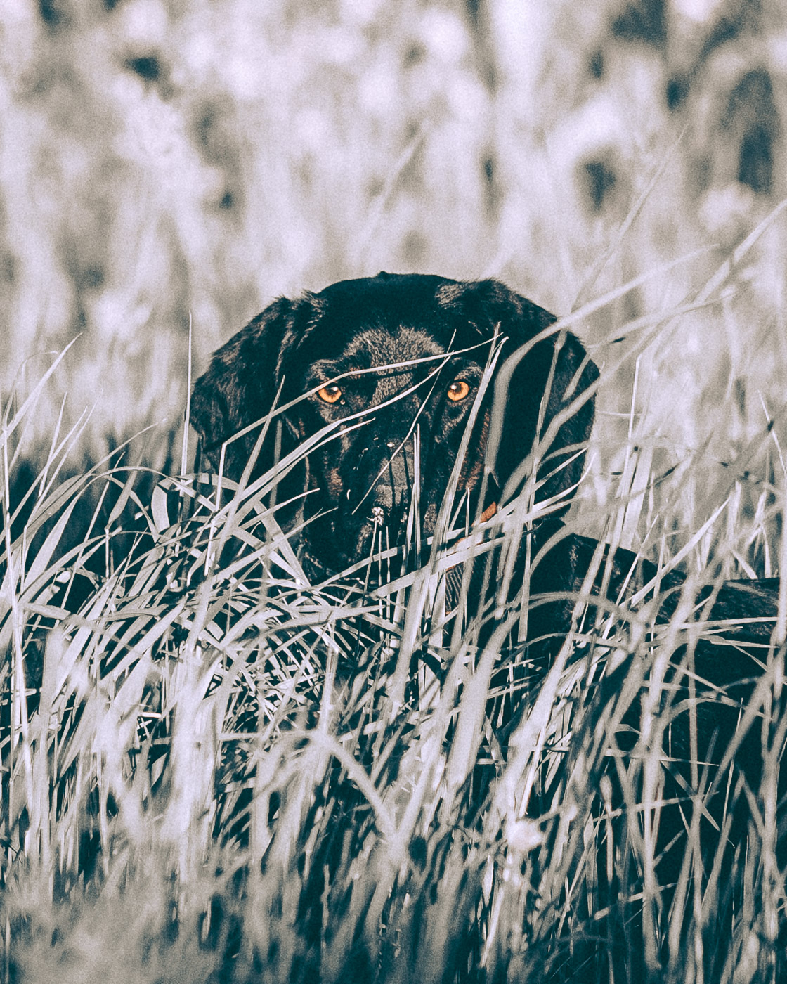 ZIBART.DE - animal - lowq - 2018.05.05 - 09143.JPG
