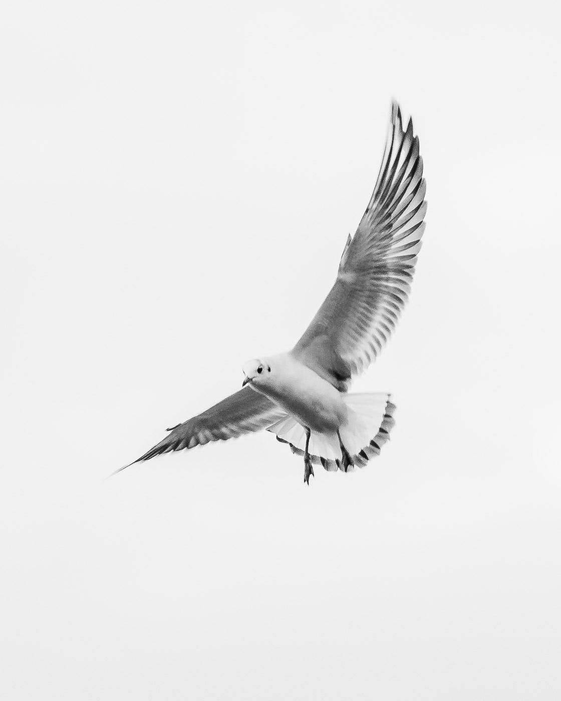 ZIBART.DE - animal - lowq - 2018.01.07 - 07394.JPG