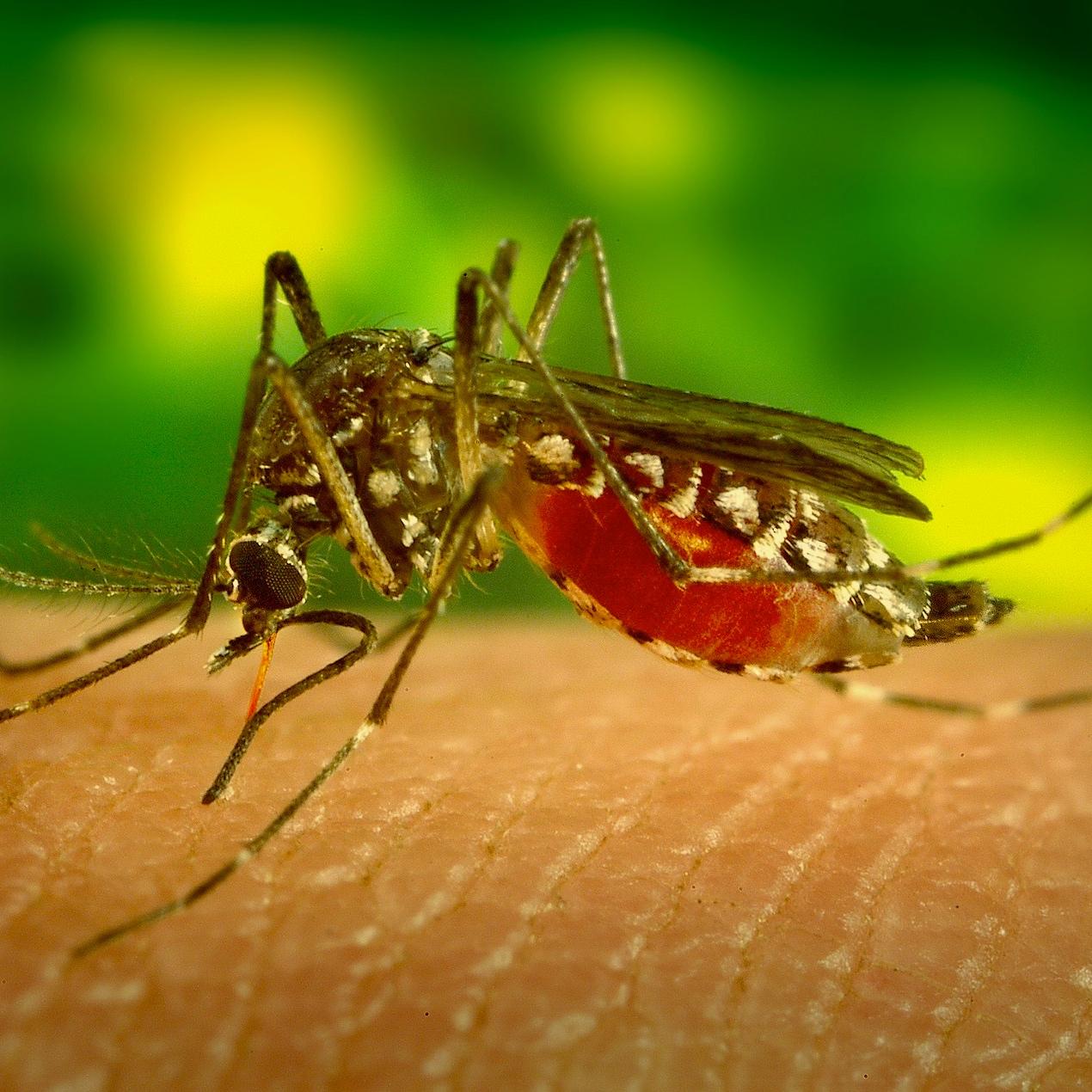 mosquito-542156_1920.jpg