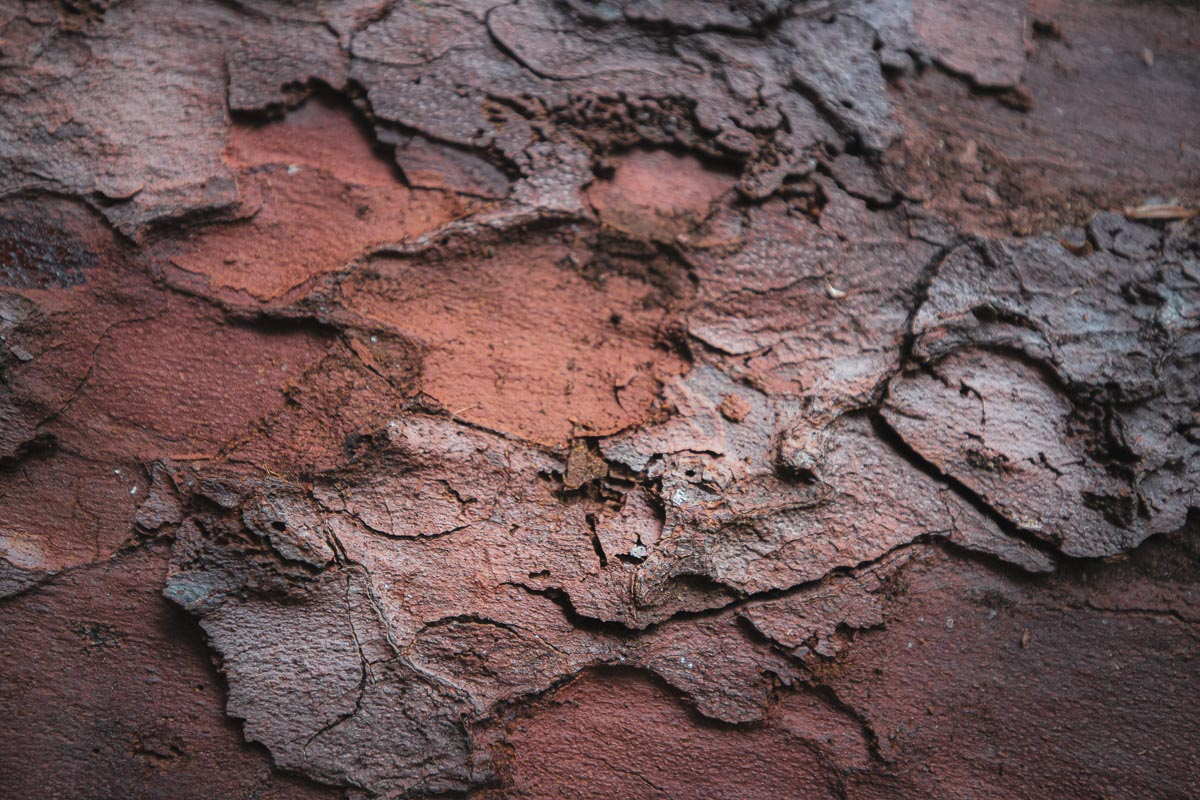 The bark is red and soft. The ground is covered in needles, but it feels like walking on a mattress.