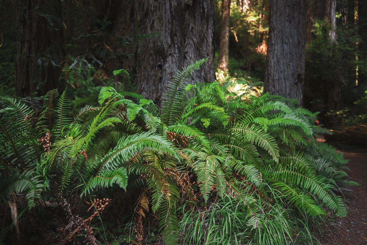 The ground is covered in lush ferns, giving the woods an exotic touch.