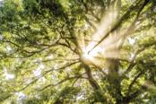 through-trees.jpg