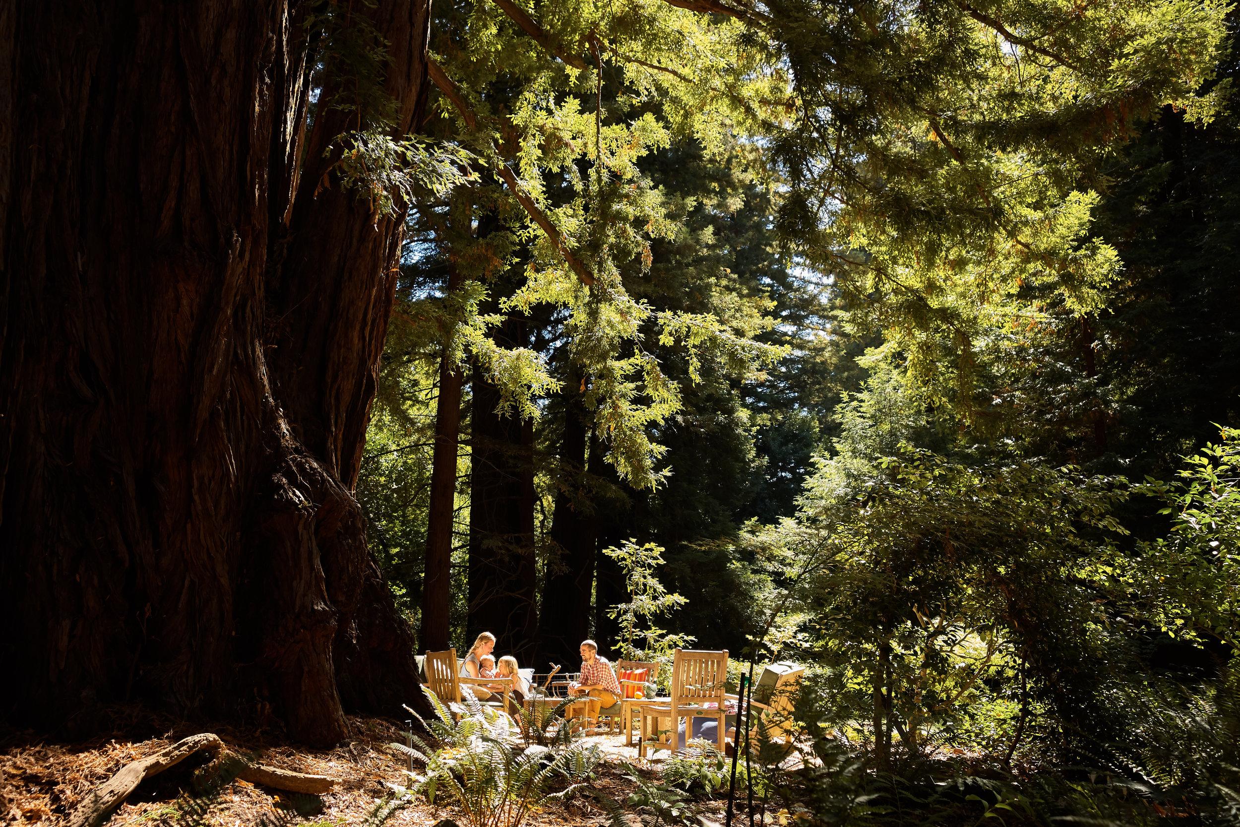 RedwoodAlt 3.jpg