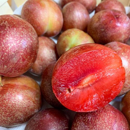 starking-delicious-plum.jpg