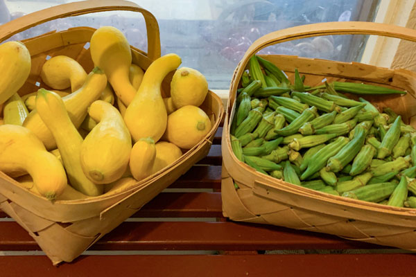 Local Squash and Okra available at MacGregor Orchard