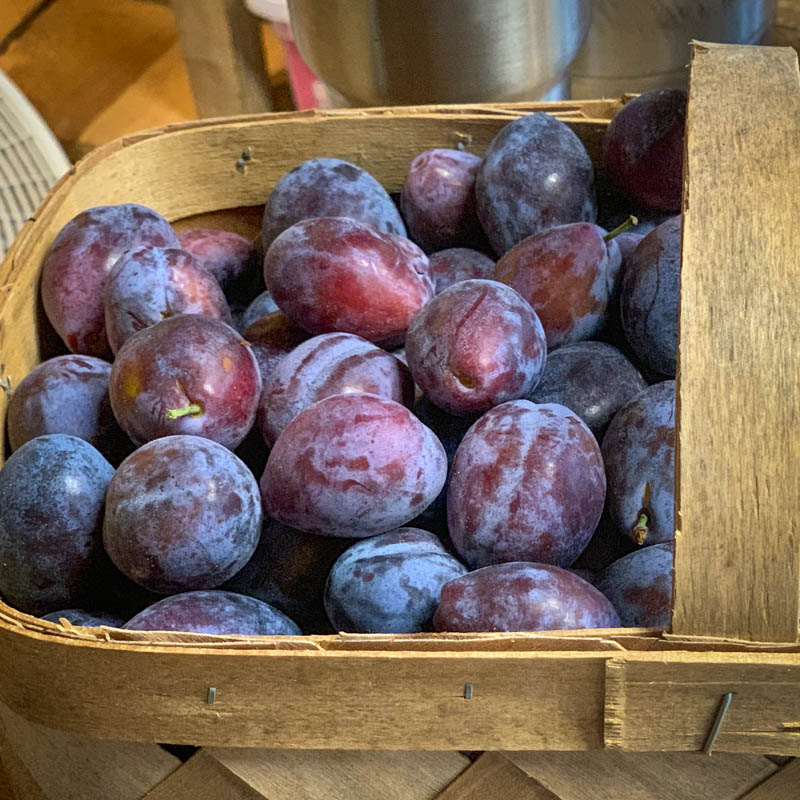 Castleton Prunes